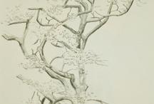 Desenho ARVORES