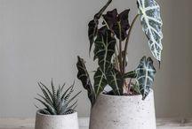 Products- Indoor Garden
