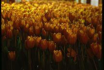 flowers & plants / by Marni Kanne