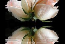 Flori / Flori pur si simplu