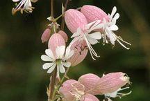 d' FLEUR / Flower