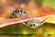 Nature/Animals/Bugs