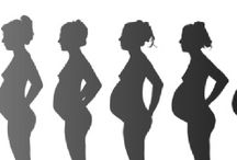 Pregnancy Week by Week / Written by Dr. Lindsay Reid, Pregnancy Week by Week provides information for all stages of your pregnancy.