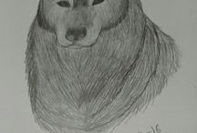 Draw / Sketch
