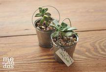 Souvenir Plantitas Monadas / Souvenirs ecológicos con tarjetería especial de Monadas