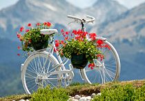 Bicycle's..... / by Becky Coles