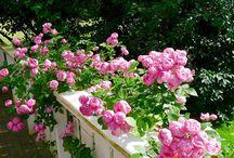 Mias Landliv Garden