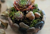Succulents and cactus / by Carla da Silveira