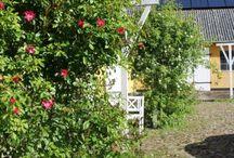 Gårdspladsen / Her er billeder fra vores gårdsplads. Den er omkranset af fire længer - og meget charmerende.