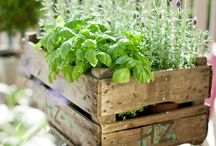 My herb garden ideas!!!<3