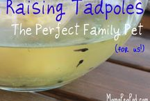 Project Tadpole