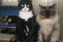My cats (and maybe others)