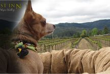 Pet Friendly / The most pet-friendly hotel in the Napa Valley, the Harvest Inn pampers pets from the moment of check-in.  Harvest Inn's special pet treatment includes a luxurious pet bed, custom pet bowls, doggy bags and delicious treats to make a pet's vacation a happy memory. Additionally, the Harvest Inn provides guests with a list of pet-friendly restaurants and wineries in the area, as well as a discount coupon for the Harvest Inn's local partner pet store, Fideaux.