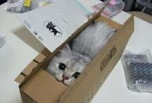 cats / by Sandra Martins