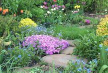 My garden / Моему саду 4 года, он еще совсем молодой, люблю каждый год добавлять новые виды растений, пока он далек от идеала, но я над ним работаю;)