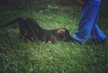 Luna lane Photography / Lifestyle, Maternity, Newborn and pet photographer.