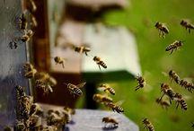 Bees&honey