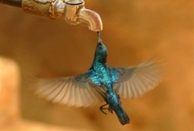 OHHH HUMMING BIRD... / by Mimi Alfaro