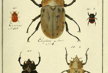 Entomologie, ou, Histoire naturelle des insectes, Paris, 1789-1808