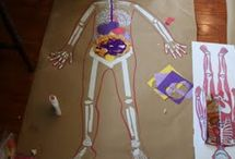 Preschool Science Human Body