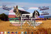 encuentros canino / carteles de concursos de perros