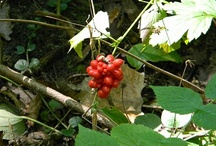 I like berries! ...and cherries too. / Especially in its branches, to see or taste..-
