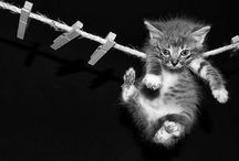 I Love Kittens! / by Shelby Nairy