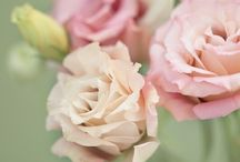 Novembre - Des fleurs, une saison