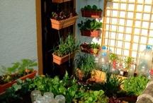 Espacios urbanos bioproductivos / Alternativas para hacer tu hogar y comunidad un lugar bioproductivo