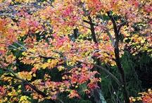 Seasons | Autumn / Favorites from the Season