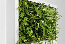 Wall plant insparaton