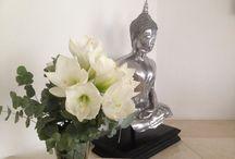 Exclusieve Bloemen / Exclusieve bloemen en bloeiende planten. Puur genieten! Leuk om cadeau te doen, maar natuurlijk ook voor uzelf!