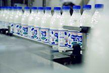 La nostra Azienda / IMA, acronimo di Industrie Meridionali Alimentari, è un'azienda lattiero-casearia ubicata nel cuore della Campania nel Comune di Pignataro Maggiore (CE). IMA opera nel settore della produzione e della distribuzione di prodotti freschi attraverso uno stabilimento produttivo e di una società commerciale cui è affidata la gestione della distribuzione, sul territorio campano, dei prodotti a marchio YMA.