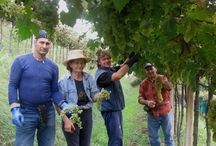 Our Passion: How We Work / Harvest and wine making: we share with you our secrets