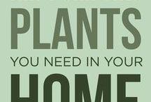 Planter & blomster, tips/ideer