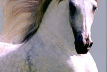 For the Love of Horses / by Jackie Creel