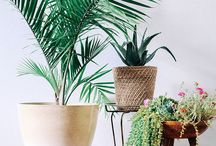 Indoor Plants ~ Greenery