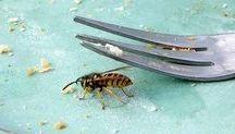 wespen wegtreiber