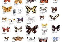 motyle butterflies