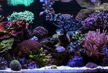 Akvárium / Reef aquarium