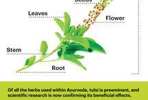 Herbs/Health