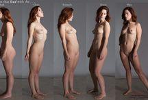 Anatomy / Model