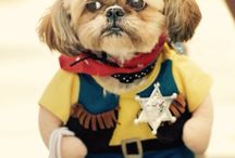 Dog costumes / by Lenora Crelot