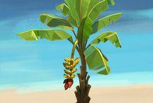 fona and flora