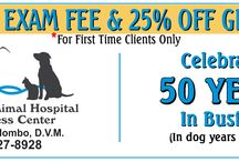 Dog Grooming / Dog Grooming Coupons Brevard County Space Coast