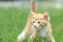 Safe Outdoor Fun for Kitty / Pet parents are discovering the fun and value of enjoying the outdoors with their cat. Here are some essentials for walks and other outdoor activities with your kitty!  / by Drs. Foster and Smith