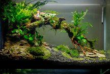 akvariumet