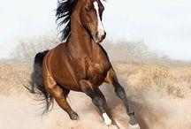 Fotos De Cavalo