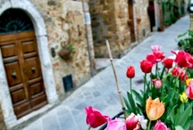 Tuscany / Tuscany - Villa Jacopone