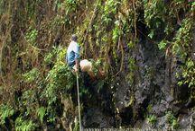 Jardines Verticales – investigación en Argentina – Selva de Misiones / En 2012, Ignacio Solano y el equipo de Paisajismo Urbano se desplazaron a la selva tropical de Misiones (Argentina).